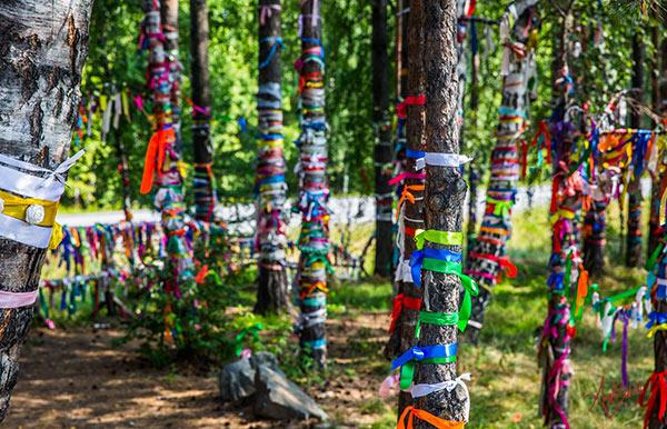 tronchi di albero decorati con nastri foto di angela bartoletti