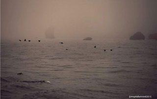 mare al tramonto con nebbia