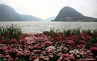 fiori montagne e mare foto di angela bartoletti